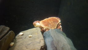 crustacean fotografia de stock
