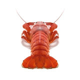 Crustacean. Isolated on white background Royalty Free Stock Image