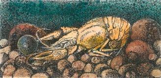 Crustacean-color. Crustacean color raster watercolor illustration Stock Image