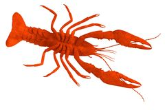 Crustacean - dead crayfish Stock Photos