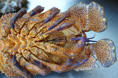 Crustacean detail Royalty Free Stock Images