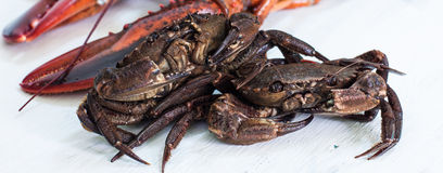 Crustacean Royalty Free Stock Images