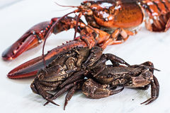 Crustacean Stock Photography