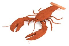 Crustacean - lobster Stock Images