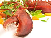 Crustacean - Lobster on white. Background royalty free stock image