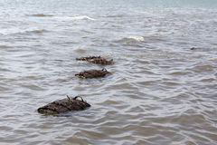 Crustacean nets in the sea. Of Cambodia royalty free stock photos