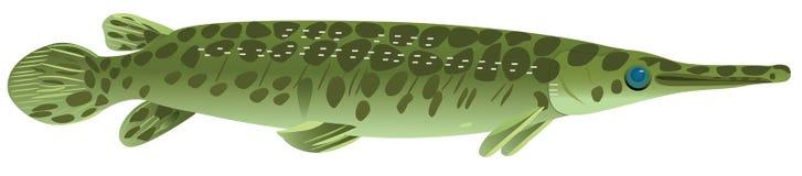 Crustacean pike. Fish crustacean pike, raster illustration Stock Images