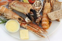 Crustacean on a plate Royalty Free Stock Photography