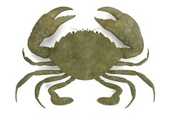Crustacean - scylla serrata Stock Photography