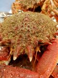 Crustacean seafood at the fish market. Sown corals and anemones Royalty Free Stock Photography