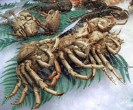 Crustaceans. Some crustaceans on crushed ice with deco Stock Image