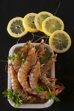 Crustaceans on black background Royalty Free Stock Photography