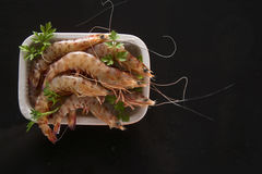 Crustaceans on black background Royalty Free Stock Photos