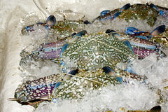 Crustaceans on ice. Various fresh crustaceans on ice in a market Stock Photos