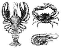 Crustaceans, shrimp, lobster or crayfish, crab with claws. River and lake or sea creatures. Freshwater aquarium. Seafood. For the menu. Engraved hand drawn in Stock Photography