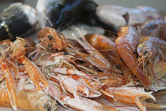 Crustaceans Royalty Free Stock Images