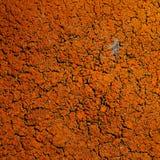 crustose λειχήνα Στοκ φωτογραφία με δικαίωμα ελεύθερης χρήσης
