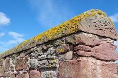 Crustose лишайник и красная каменная стена Стоковые Изображения
