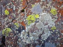 Crustose lav på en ökenstenblock Arkivbild