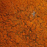 Crustose lichen. Orange crustose areolate lichens background royalty free stock photo