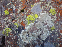 Crustose Lichen on a Desert Boulder. In Eastern Washington Stock Photography