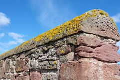 Crustose Lichen and Red Stone Wall Stock Images