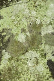 Crustose lichens on rock from New London, New Hampshire. Stock Image
