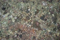 Crustose liszaj - Krajobrazowa różnorodność obraz royalty free