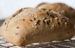 Crusty Ciabatta Bread Roll. Royalty Free Stock Photos