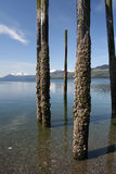 Crusty Pilings Royalty Free Stock Images