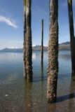 Crusty Pilings. Barnacles encrust old pilings in Southeastern Alaska Royalty Free Stock Images