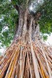 Crutches a árvore do bodhi, tradição tailandesa no norte de Tailândia fotografia de stock royalty free