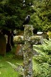 Cruz, cementerio, pájaro negro Imágenes de archivo libres de regalías
