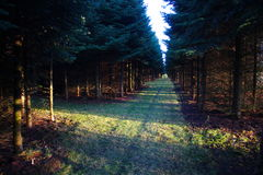 Cruz da floresta no sol foto de stock