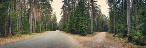 Cruz de la carretera de asfalto en el bosque Imagenes de archivo