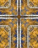 Cruz de los álamos tembloses del otoño Foto de archivo