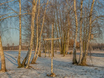 Cruz del árbol de abedul teniendo en cuenta el sol de la mañana Foto de archivo