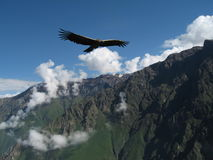 Cruz Del Condor Stockbild