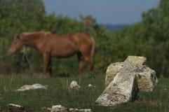 Cruz e cavalo imagem de stock