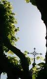 Cruz entre as árvores Fotografia de Stock Royalty Free