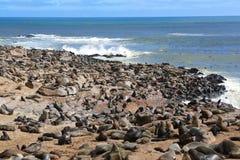 Cruz Namíbia do cabo dos lobo-marinhos Foto de Stock