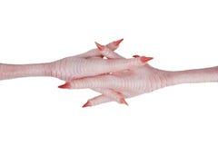 Cruzado pies rosados del pollo con las garras Fotos de archivo
