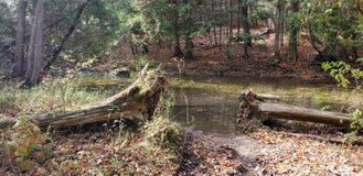 Cruzamento de rio? foto de stock royalty free