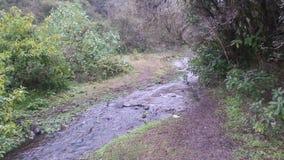 Cruzamento de rio uma floresta imagens de stock