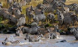 Cruzamento de zebra do grupo o rio Mara kenya tanzânia Parque nacional serengeti Maasai Mara Fotografia de Stock