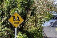 Cruzamento dos pinguins foto de stock royalty free