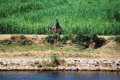 Cruzando em Nile River, o campo, Egito do sul foto de stock