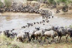 Cruzando o Mara Imagens de Stock Royalty Free