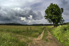 Cruzando o prado sob nuvens de tempestade com uma grande árvore no fundo das madeiras Foto de Stock