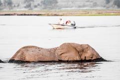 Cruzando o rio quando um barco se aproximar Imagem de Stock